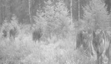 Minst 9 ulver på film