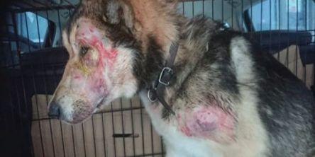 Dyrlegekontor avviste hardt skadet hund