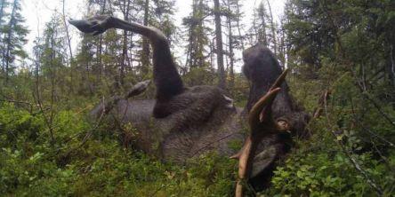 Ingen endringer i jakttida i Nord-Trøndelag