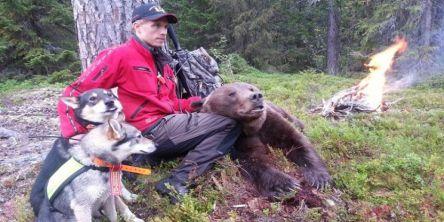 Oppgang i bjørnebestanden