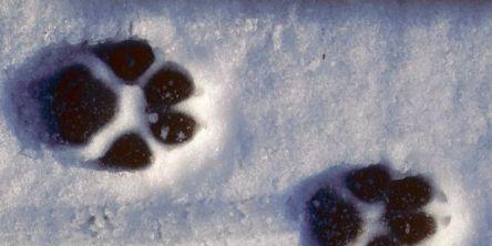 Har påvist 101-107 ulver i Norge