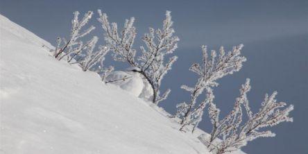 Vinterjakta inne i ny forskrift